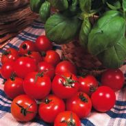 Tomato Gardeners Delight 1 gram - Bulk Discounts available